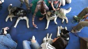 As meninas são fotografadas com os cães que encontram-se no assoalho video estoque