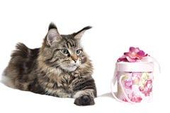 as mentiras adultas do gato Fotografia de Stock Royalty Free
