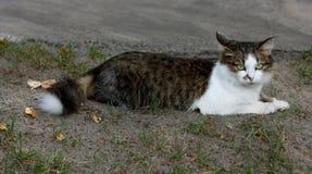 As mentiras do gato Imagem de Stock