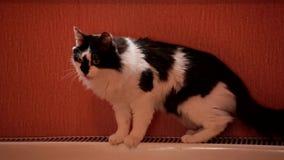 As mentiras preto e branco bonitos do gato em uma bateria do aquecimento central então aumentam e saem vídeos de arquivo