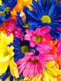As misturas as mais brilhantes das flores fotografia de stock