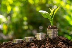 As moedas com a planta na parte superior puseram sobre o solo no backgrou verde da natureza imagem de stock royalty free