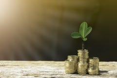 As moedas e a árvore mostram o crescimento de economias do dinheiro foto de stock
