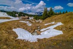 As montanhas bonitas de Suíça ajardinam com as flores de florescência do dente-de-leão Imagens de Stock