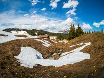 As montanhas bonitas de Suíça ajardinam com as flores de florescência do dente-de-leão Imagem de Stock Royalty Free