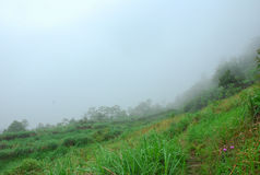 As montanhas da cor da névoa Fotos de Stock Royalty Free