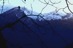 As montanhas da neve variam ramos de árvores fotos de stock royalty free