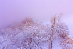 As montanhas de Deogyusan são cobertas pela neve Fotos de Stock