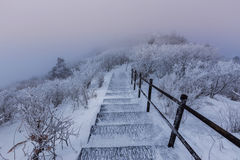 As montanhas de Deogyusan são cobertas pela neve Imagem de Stock Royalty Free