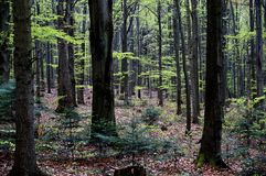 As montanhas de Swietokrzyskie Fotos de Stock