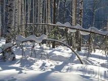 As montanhas de Ural, uma floresta do inverno, uma árvore na neve, uma foto maravilhosa do ` s do dia de inverno foto de stock royalty free