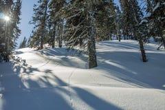 As montanhas misteriosas da paisagem do inverno em árvores do inverno cobriram a neve Fotografia de Stock Royalty Free