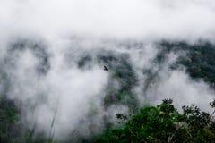 As montanhas nevoentas que cercam baixas nuvens e Hornbills voam em Tailândia Fotos de Stock Royalty Free