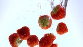 As morangos frescas caem na água - tiro do movimento lento filme