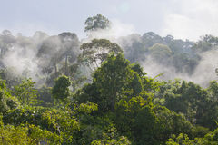 Morning at the Top of a Tropical Cloud Forest stock photos