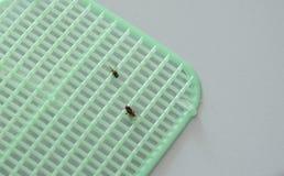 As moscas obtiveram matanças pelo flapper plástico no assoalho de telha Foto de Stock