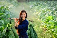 As mulheres do Lao levam a folha do cigarro para introduzir no mercado Imagem de Stock Royalty Free