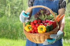 As mulheres entregam manter uma cesta cheia dos vegetais imagem de stock royalty free