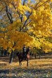 As mulheres equestres montam através de um bosque no crepúsculo Fotografia de Stock Royalty Free