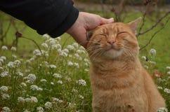As mulheres pets um gato Fotos de Stock Royalty Free