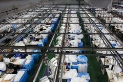 As mulheres são contratadas na costura das calças justas Imagem de Stock Royalty Free