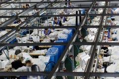 As mulheres são contratadas na costura das calças justas Imagem de Stock