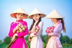 As mulheres vietnamianas est?o recolhendo os l?tus fotos de stock royalty free