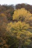 As naturezas veem durante o outono fotos de stock