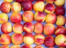 As nectarina vermelhas maduras estão na caixa Imagem de Stock