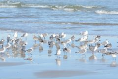 As ondas calmas e a oferta maré rasa da associação um lugar de convite para que as gaivotas descansem fotografia de stock royalty free