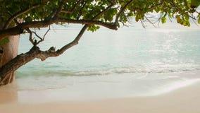 As ondas da vista quebram na praia tropical da ilha Ondas do mar na ilha bonita Seychelles, som estéreo vídeos de arquivo