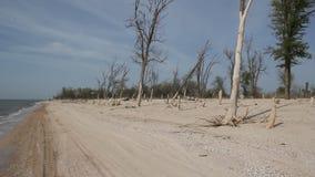 As ondas pequenas lavam o Sandy Beach filme