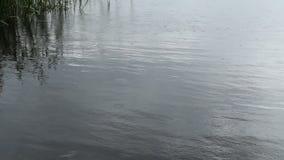 As ondinhas da chuva, mergulhos pescam e borboletas filme