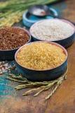 As orelhas verdes do arroz do arroz de Camargue colocam em França e valiety fotografia de stock royalty free