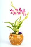 As orquídeas inventam Imagem de Stock Royalty Free