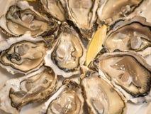 As ostras abertas serviram com fatias frescas de limão Fotografia de Stock
