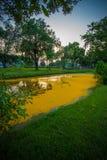 As pétalas amarelas caídas de Padauk florescem cobrindo a lagoa com o céu da noite no parque público de Phutthamonthon, província Imagem de Stock Royalty Free