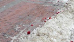 As pétalas de um ramalhete das rosas encontram-se na neve vídeos de arquivo