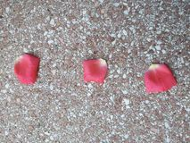 As pétalas do rosa de Rosa encontram-se na terra fotos de stock