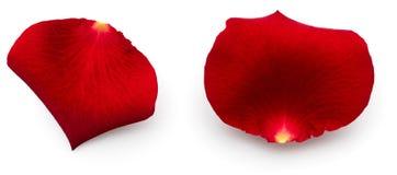 As pétalas do vermelho levantaram-se Imagem de Stock Royalty Free