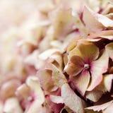 As pétalas roxas Fotos de Stock