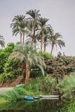 As palmas de coco crescem no banco do rio contra o céu azul, um fundo tropical bonito imagens de stock royalty free