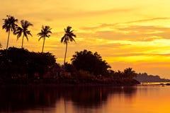 As palmas de coco na areia encalham no trópico no por do sol imagem de stock royalty free