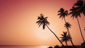 As palmas do verão da natureza encalham o nascer do sol Ilha tropical em Oceano Atlântico video estoque