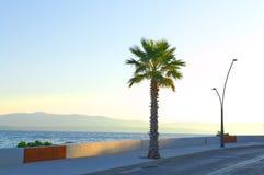 As palmas estão estando na praia do brac fotografia de stock royalty free