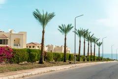 As palmeiras altas crescem ao longo da estrada foto de stock