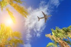 As palmeiras de passagem planas cobrem com o céu azul no fundo imagem de stock royalty free