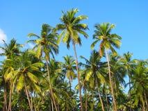 As palmeiras do céu azul em Palolem encalham, Goa, India fotos de stock royalty free
