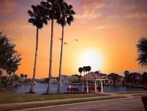 As palmeiras do verão andam o parque da caminhada da terra do açúcar da opinião do lago do por do sol imagem de stock