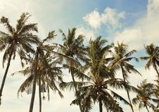 As palmeiras estão na praia foto de stock